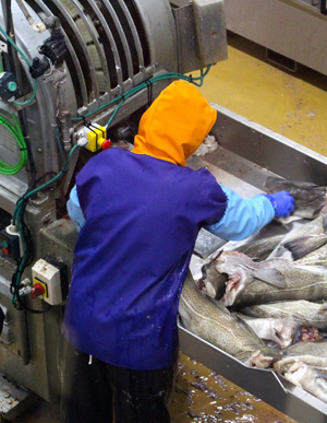 Brine recovery in the codfish industry